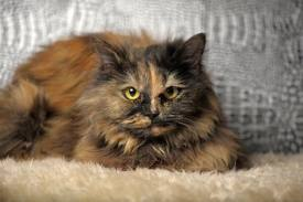 Tortoiseshell cat because that's ultimately what the internet is for.  Cat pictures.